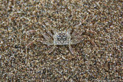 A transparent beach crab