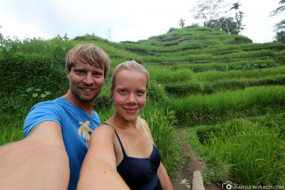 The travel terraces in Ubud