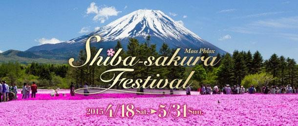2015, Shibazakura Festival, Japan, Mount Fuji, Fujinomiya, Sehenswürdigkeiten, Auf eigene Faust, Reisebericht