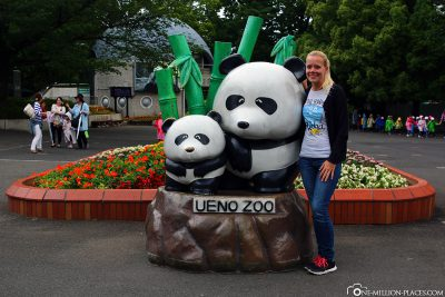 The Great Pandas