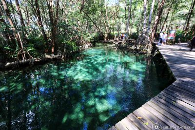 The freshwater spring of Isla Péjaros