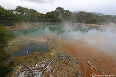 Der Kuirau Park in Rotorua