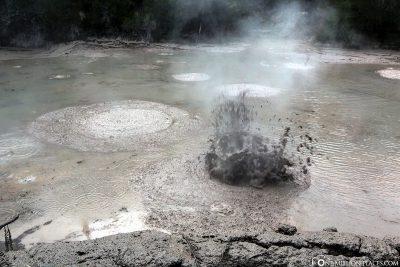 The Mud Pools
