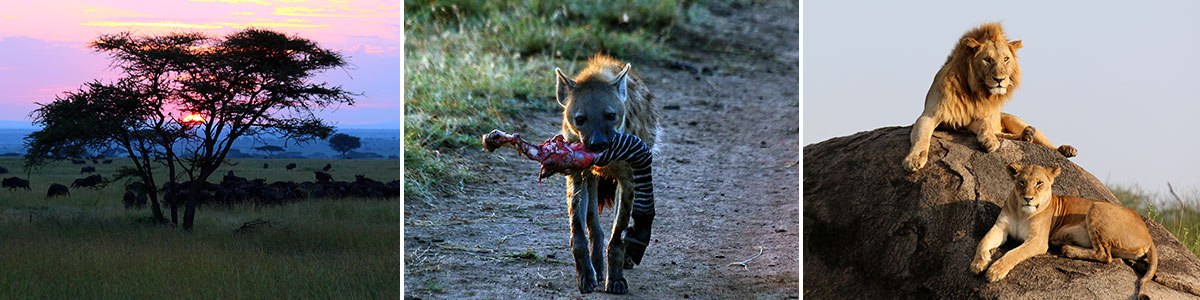 Safari Serengeti Nationalpark Headerbild