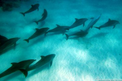 Swim with dolphins in Sansibar