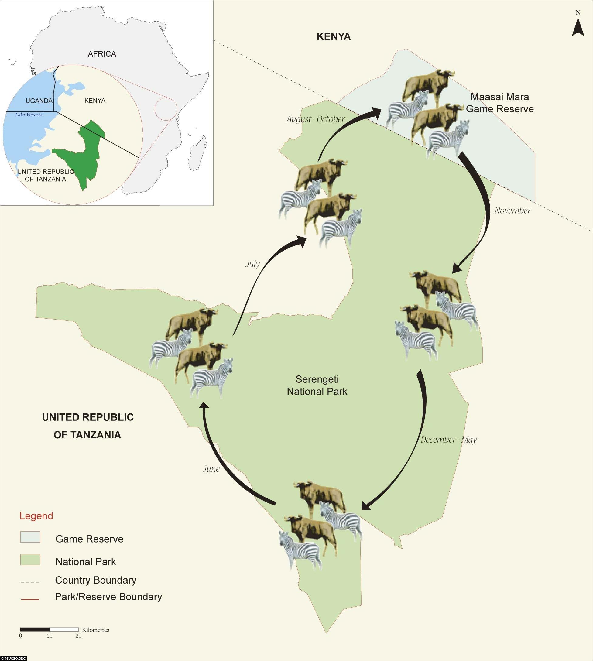 Map, Animal Migration, Serengeti National Park, Safari, Tanzania, Africa, Tour, Travel Report