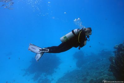 Diving in Marsa Shouna