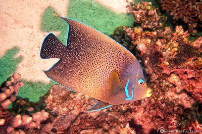 Die Unterwasserwelt am Ningaloo Riff