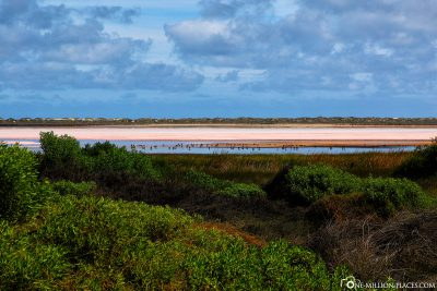 The Hutt Lagoon at Port Gregory