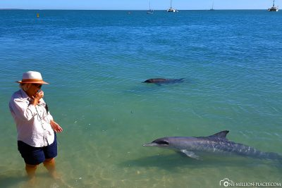 The dolphins very close to the beach