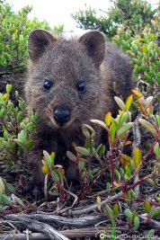 Sieht er nicht aus wie ein kleiner Bär?