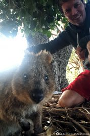 A selfie with a quokka