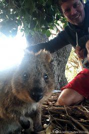 Ein Selfie mit einem Quokka