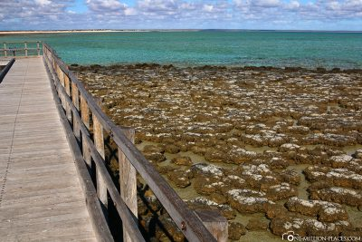 Hamelin Pool Marine Nature Reserve