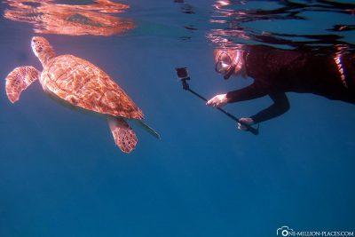 Schnorcheln mit Schildkröten in Barbados