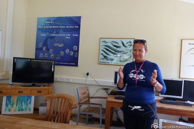 Our briefing on diving with dolphins