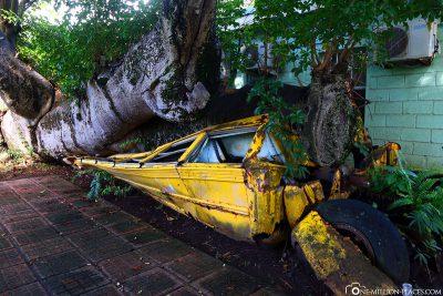 Der von einem Baum zerquetschte Schulbus