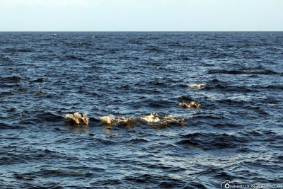 Eine Gruppe von Delfinen