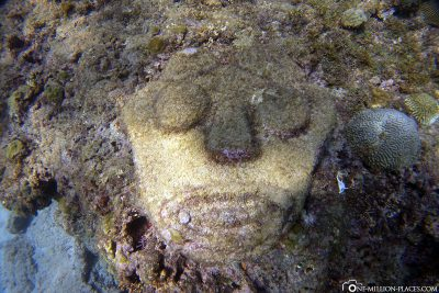 Stone slabs with faces