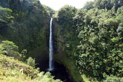 The Akaka Falls on Big Island in Hawaii