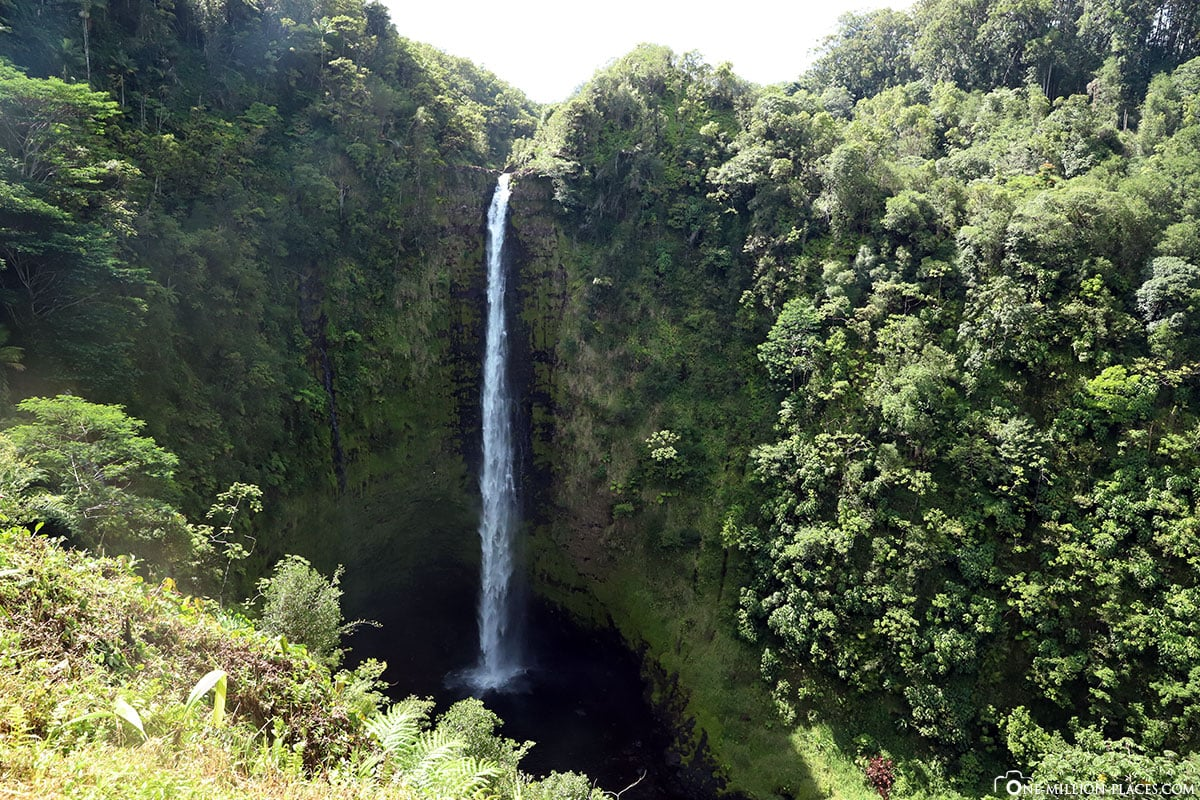 Akaka Falls State Park, Waterfall, Big Island, Attractions, Hawaii, USA, Photo Spot, TravelReport