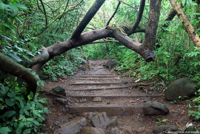The way to Manoa Falls