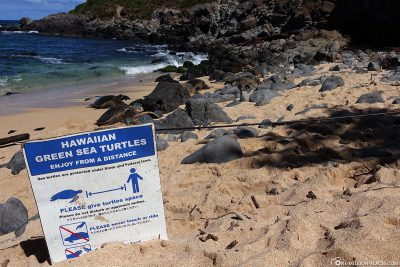 Sign Hawaiian Green Sea Turtles