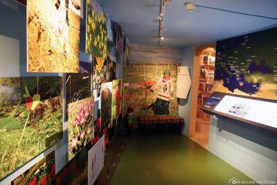 Das Tulpenmuseum
