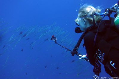 Diving at the Blue Corner