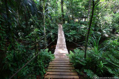 Eine Hängebrücke kurz vor dem Wasserfall