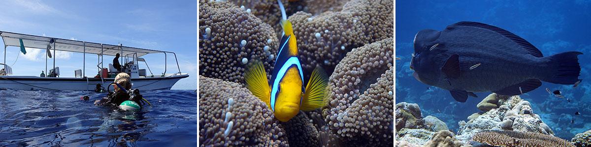Palau Tauchen Peleliu Headerbild