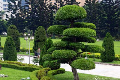 Funny-looking trees