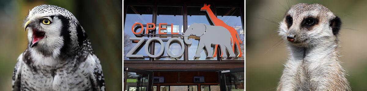 Kronberg Opel Zoo Headerbild