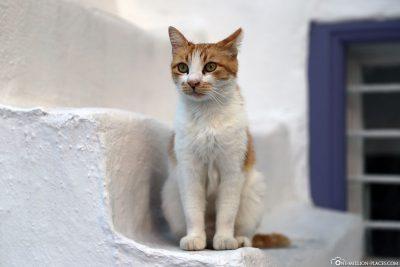 Eine Katze auf einer der weißen Treppen
