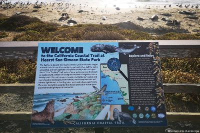 Willkommen am Elephant Seal Vista Point