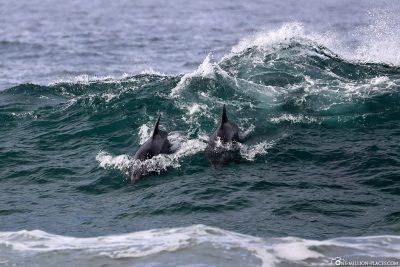 Delfine am Pfeiffer Beach