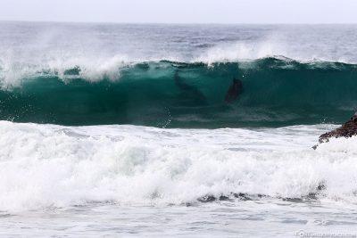 Die Delfine reiten in den Wellen