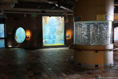 Das Aquarium in Monterey