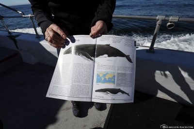 Information about humpback whales