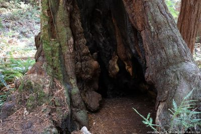 A hollowed-out tree