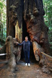 Die Muir Woods in Kalifornien