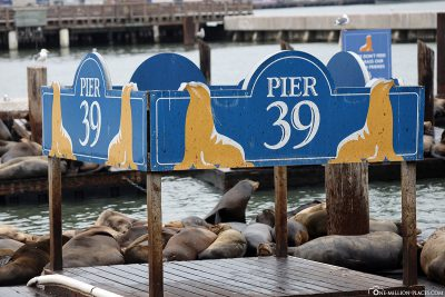 The Sea Lion Colony at Pier 39