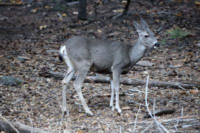 Sehr zutrauliche Tiere im Park