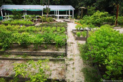 The Chefs Garden