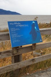 Infotafel über die Belugas in Alaska