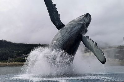 Statue von einem Buckelwal