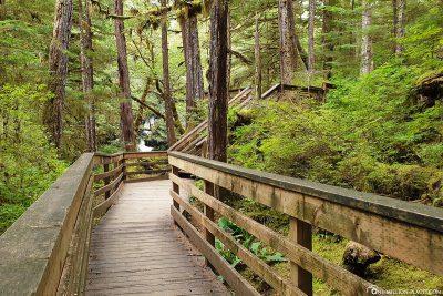 Spaziergang durch den Regenwald