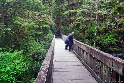 Brücke über dem Lunch Creek