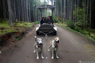 Die Hundeschlitten auf Rädern