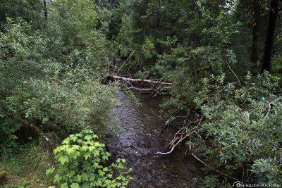 Der kleine Fluss mit den Lachsen